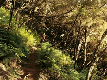 Gardens and Flora of Madeira