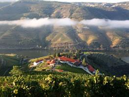 wine_homepage